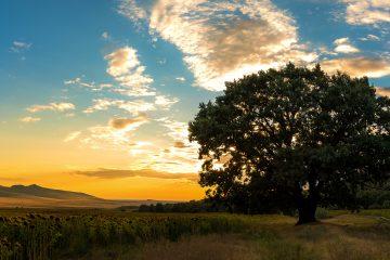 Panoramă, munții Măcin // foto: Andra Panduru