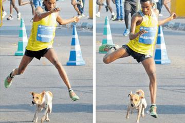 câine atac la un alergător