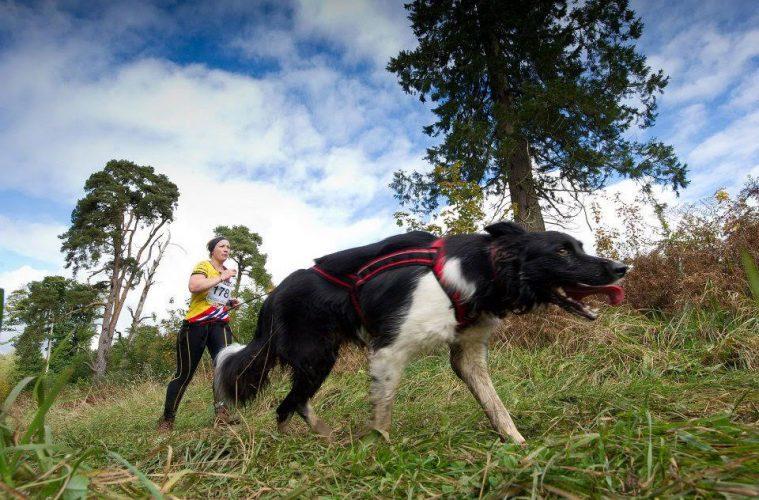 Câinele, în proba de alergare a unui trialton canin