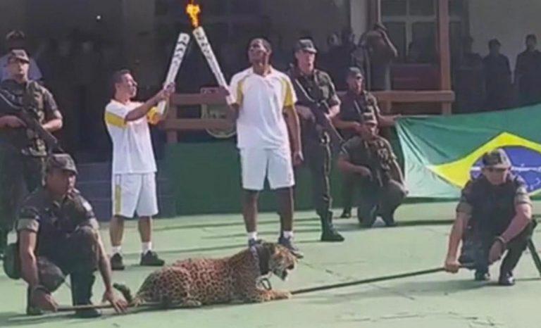 Juma, jaguarul